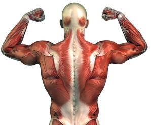 Тренування спини: корисні вправи для здоров'я і краси