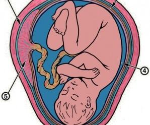 Куди дівається пуповина у матері після пологів, для чого вона згодитися
