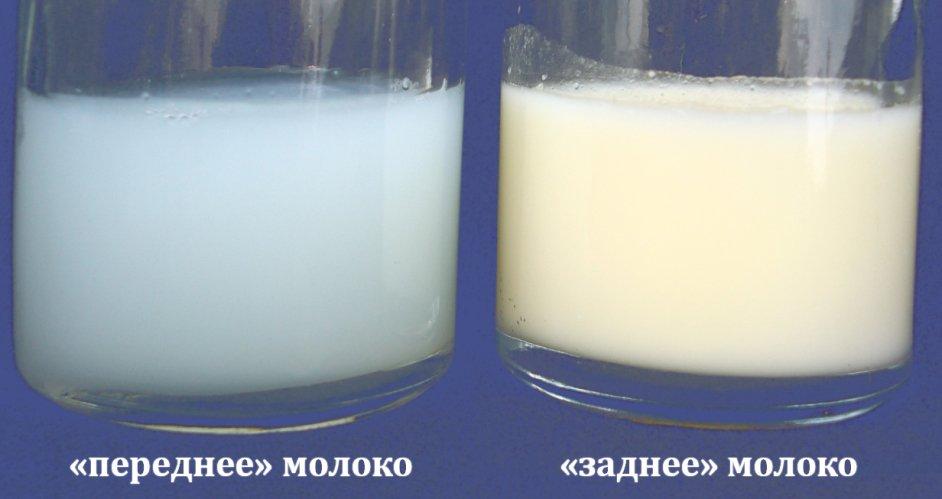Как сделать чтобы не было застоя молока 88